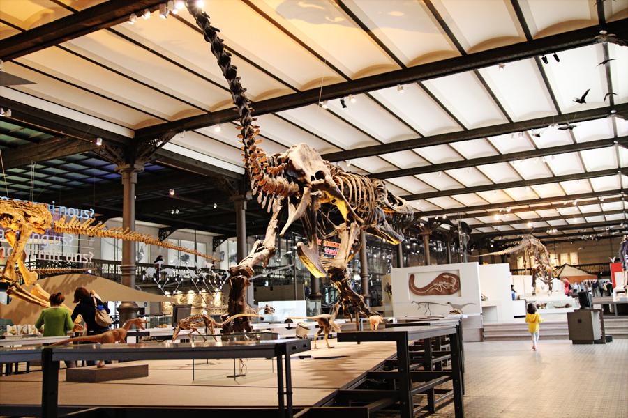 museu de ciências naturais dino 01