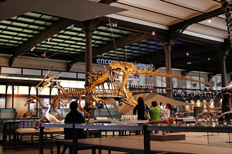 museu de ciências naturais dino 02