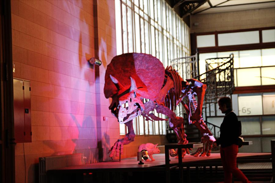 museu de ciências naturais dino 03