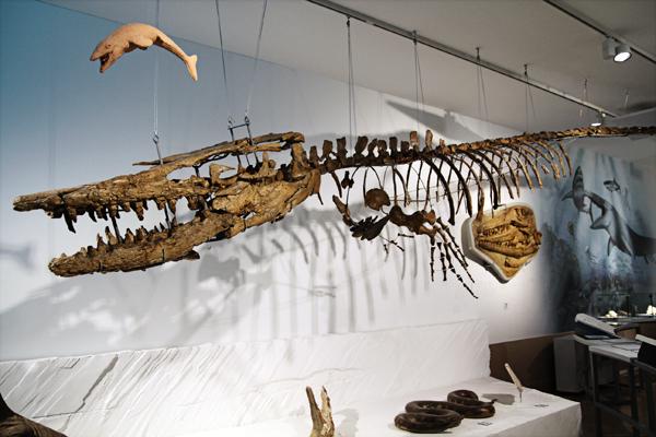 museu de ciências naturais dino aquático